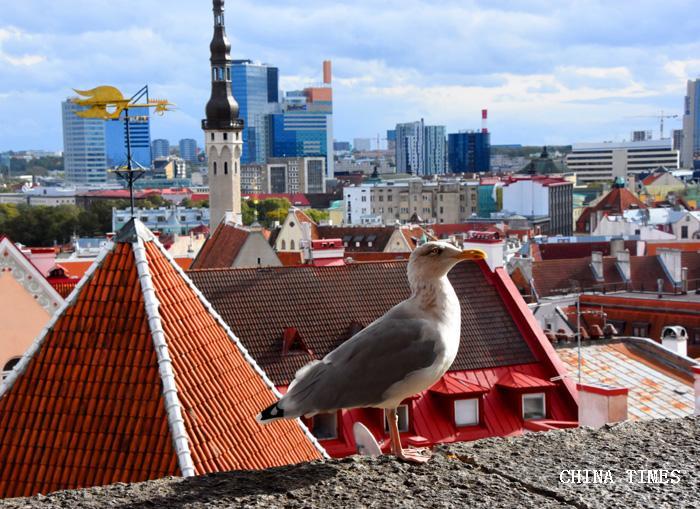 025城墙上的海鸥(摄影:冯赣.jpg